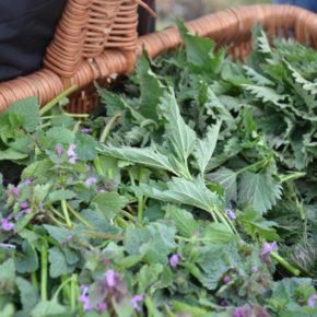 wybierzcie się na ziołowy spacer – rośliny was uzdrowią!